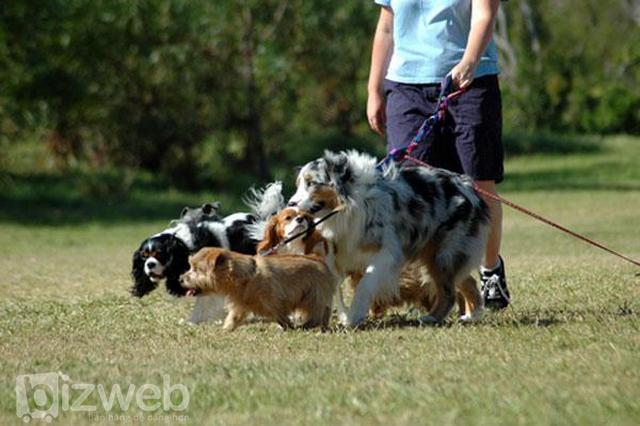 Chăm sóc thú cưng - ý tưởng kinh doanh part time